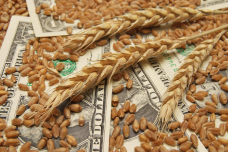 Image of wheat kernels and dollars